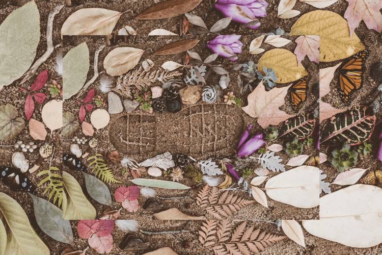 footprint in the dirt surrounded by leaves and flowers